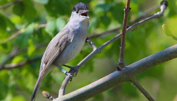 Dar de comer a las aves puede alterar sus hábitos migratorios