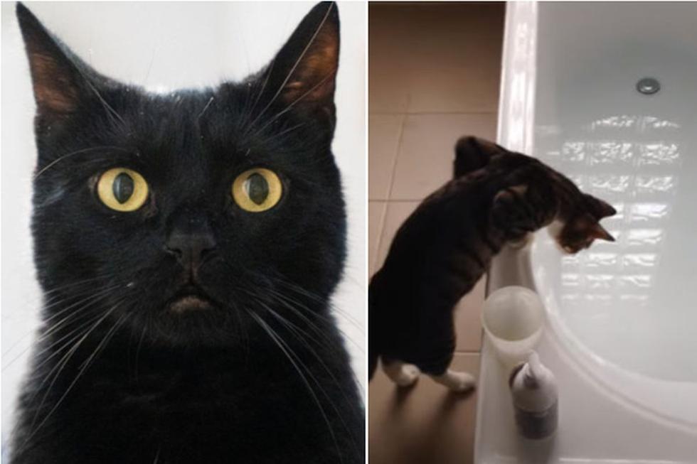 Al parecer, el gato no sabía exactamente lo que había dentro de la tina. (Pixabay /  YouTube: ViralHog)