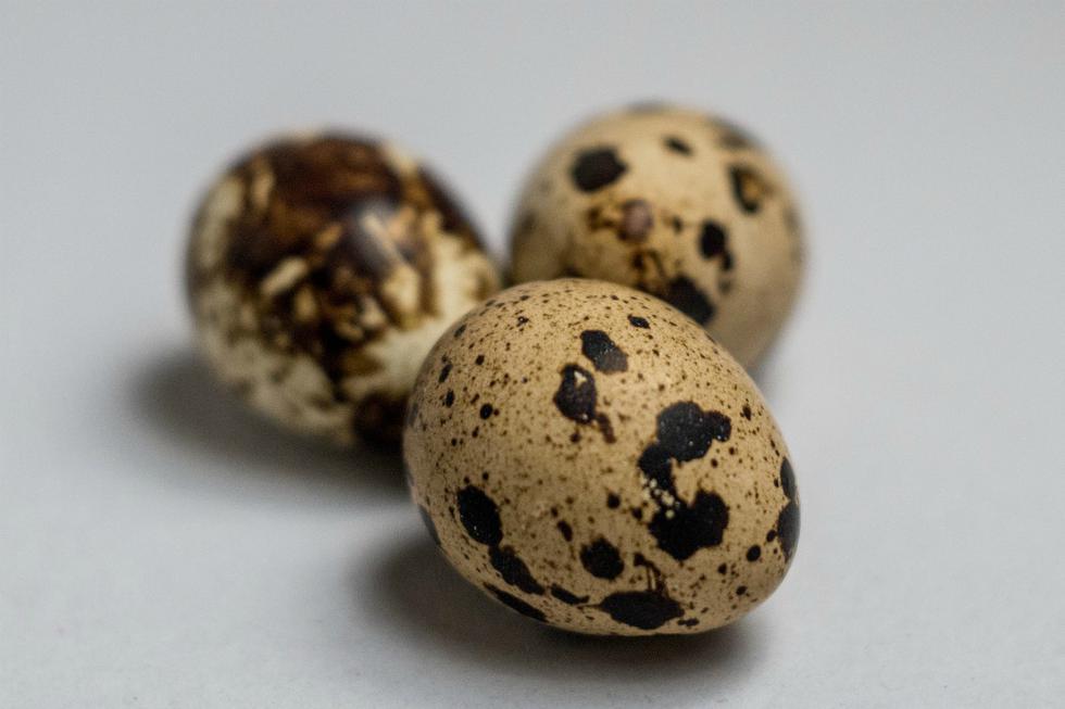 El truco para pelar huevos de codorniz a toda velocidad. (mustafaunlu09   Pixabay)