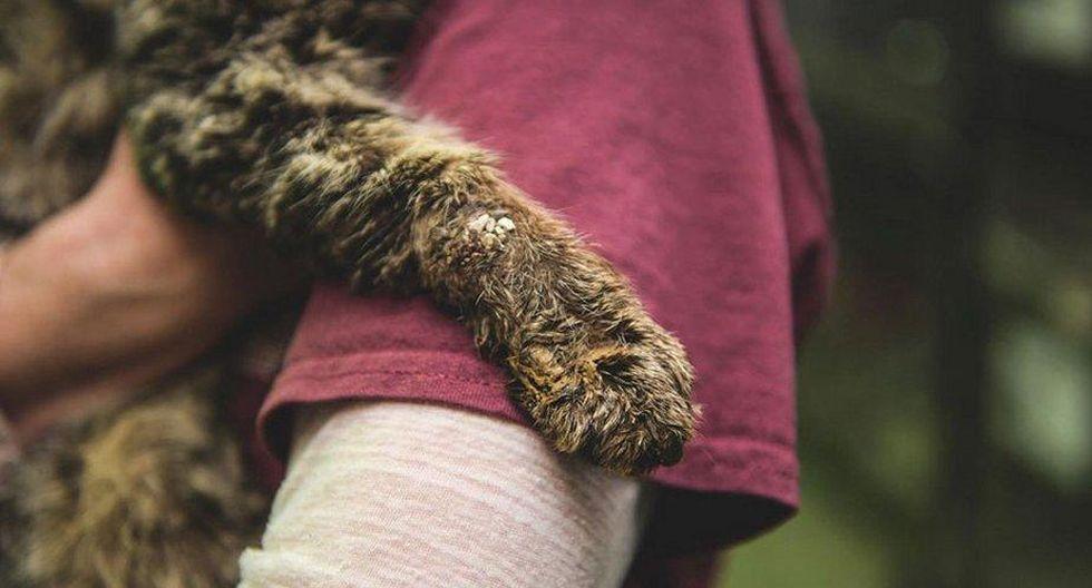 Este pobre gatito sufrió mucho hasta que encontró una posibilidad de seguir viviendo gracias a una chica. (Foto: Facebook/Leave No Paws Behind, Inc.)