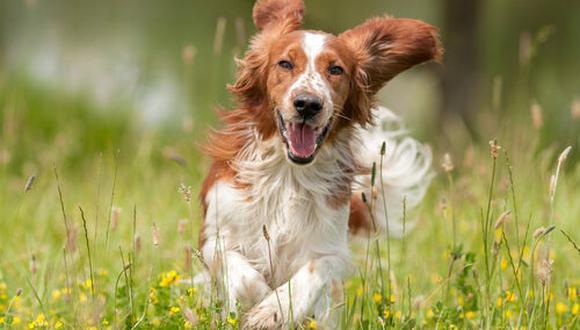 Un trato amoroso es muy aconsejable para la salud de tu mascota (Foto: pixabay)