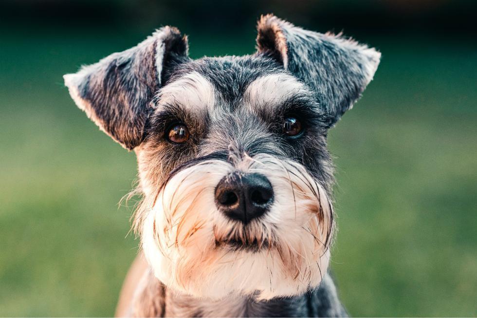 FOTO 1 DE 3 | Hay muchas razones por las que deberías entrenar a tu mascota y, a continuación, te decimos cuáles son las más importantes. | Foto: Pexels | (Desliza a la izquierda para ver más fotos)