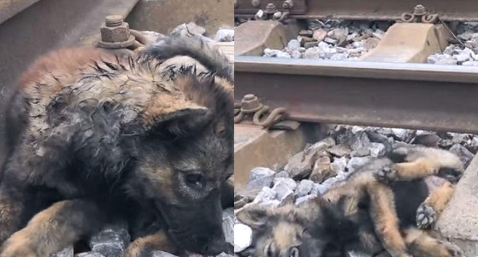 El perrito raza pastor alemán se encontraba casi al borde de la muerte. | Foto: Tran The/YouTube