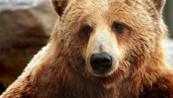 El oso sorprendió a una gran parte de la comunidad del portal de YouTube. (Pixabay)
