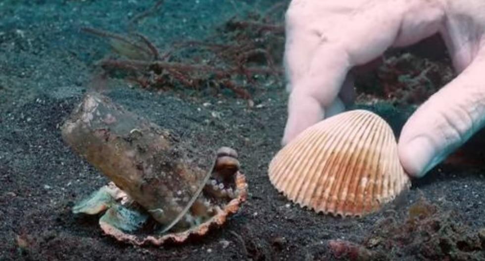Un grupo de buceadores de profundidad ayudó a un pulpo a encontrar un hogar más acorde a sus necesidades. (Foto: Pall Sigurdsson en YouTube)