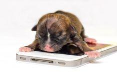 Winnie: el perro salchicha más caro del mundo