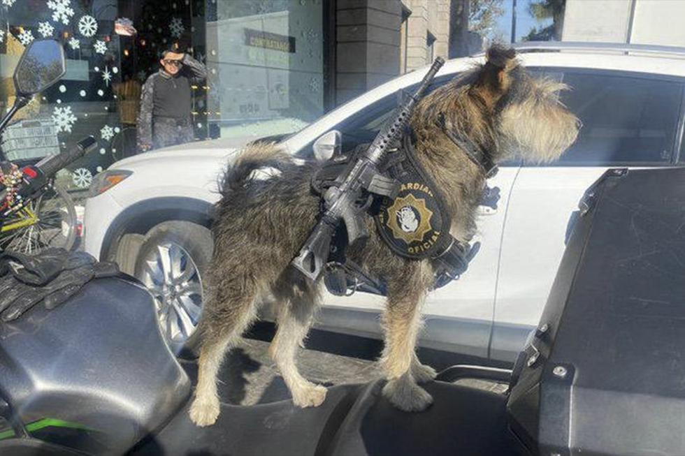 Panadería contrató a perrito como guardia de seguridad. Inspira respeto y ternura con su uniforme. (Facebook | Ramón Ramírez)