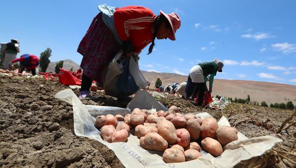 La medida busca beneficiar a la agricultura familiar. (Foto: GEC)