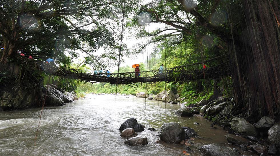 Descubre el poder natural de estos puentes de raíces vivas - 1