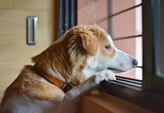 WUF: Conoce cómo lidiar con la ansiedad de separación post cuarentena de tu perro