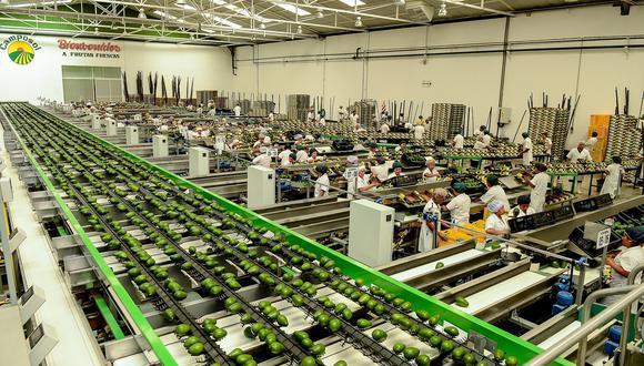 El Perú se ha convertido en el segundo mayor exportador de palta en el mundo. (Foto: difusión)