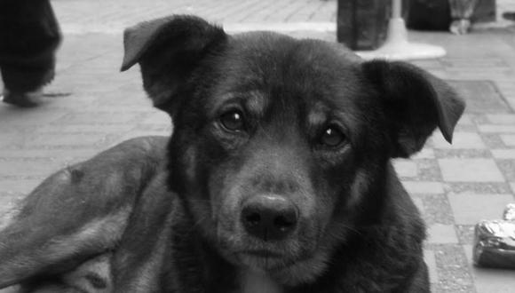 Un perro protagoniza un video de YouTube que tiene más de 18 millones de vistas. (Pixabay)