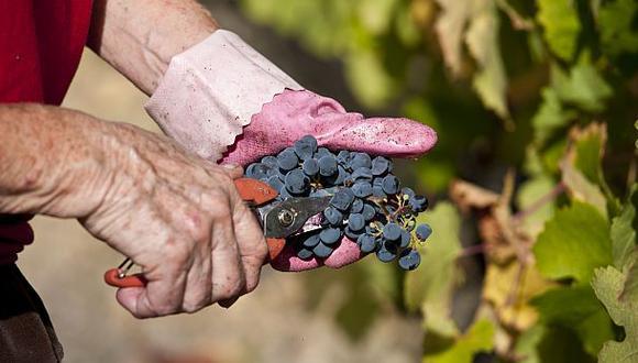 Uvas lideran el ránking de exportación de frutas y hortalizas