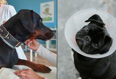 Primeros auxilios para perros: 7 cosas que debes saber ante una emergencia en casa