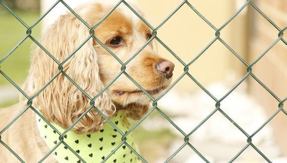 El perro se topó con una reja cuando caminaba, pero pudo evadirla sin mucha dificultad. (Pixabay)