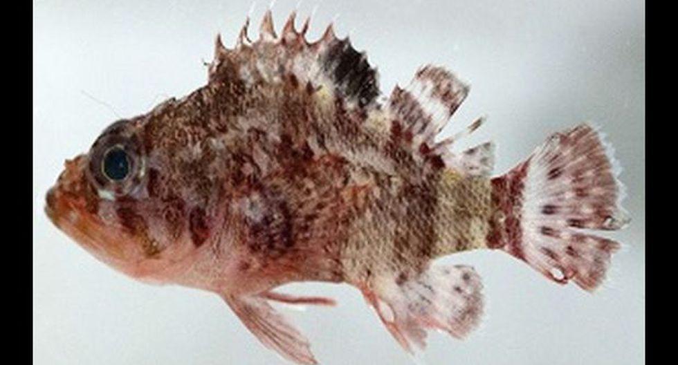 Descubren nuevas especies de peces en las islas Galápagos