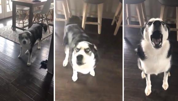 Un perro quiso pasarse de listo y recurrió a una artimaña para que su dueña no le llame más la atención por su falta. (Foto: Fresh Bits en YouTube)