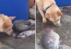 El perro que quiere salvar a los peces