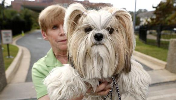 Alemania: abren polémica tienda de comida gourmet para perros en Berlín