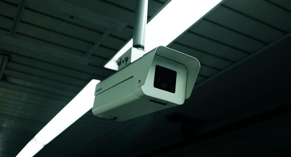 Una cámara de seguridad grabó cómo un raro animal invadió una residencia familiar en la noche del pasado 15 de octubre | Foto: Pixabay / StockSnap