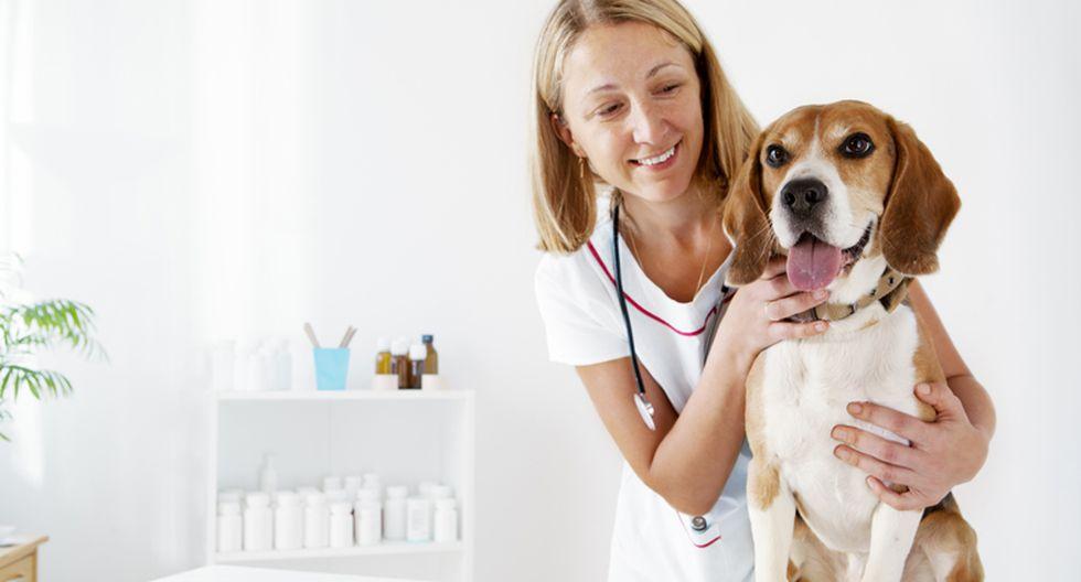 ¿Es mejor que esterilices a tu mascota?