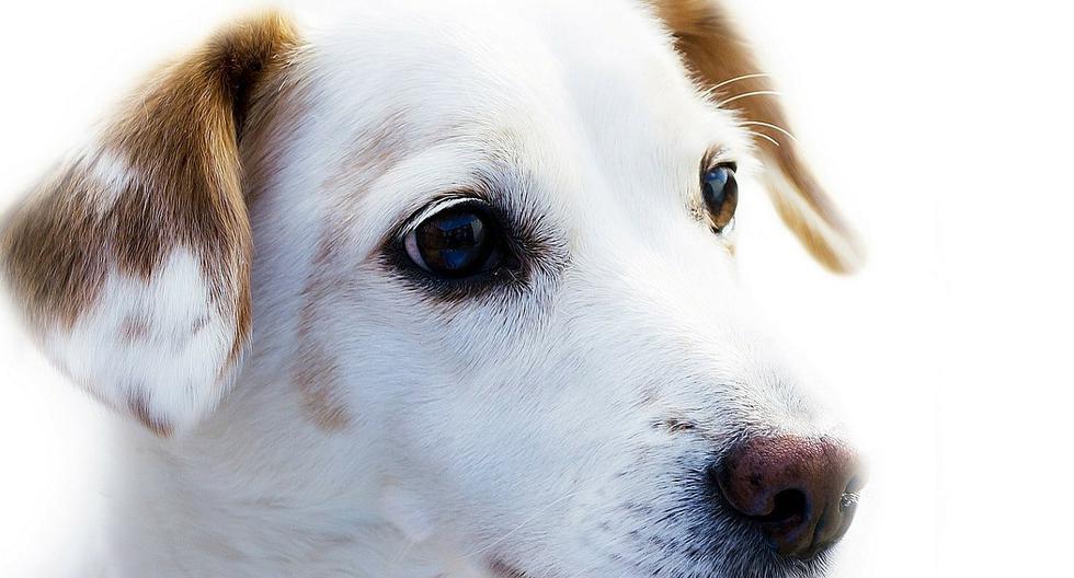 Historias de perros abandonados abundan en redes sociales. Pocas veces se ve que los dueños dejen mensajes en las mascota que dejan a su suerte. (Foto:  PublicDomainPictures / Pixabay)
