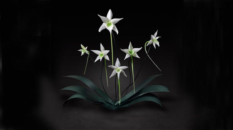 ¿Son reales? Estas flores gigantescas están hechas de vidrio - 2