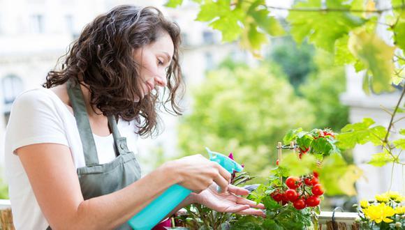 Es necesario vigilar de forma constante las plantas para evitar que sean atacadas por cualquier tipo de plagas.