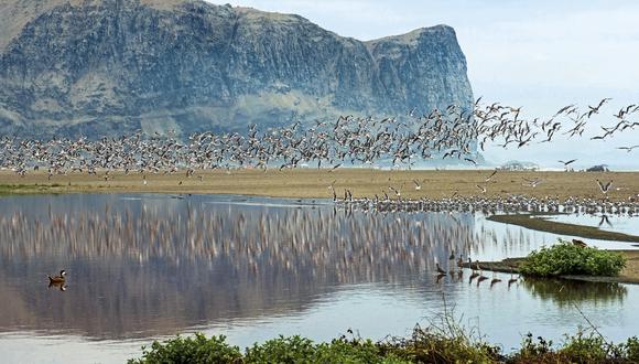 Playa Yaya, con su imponente morro del mismo nombre, en las Salinas de Chilca. Miles de aves migratorias dan su paseo por este paraje encantado tan cerca de Lima. (Foto: Flor Ruiz)