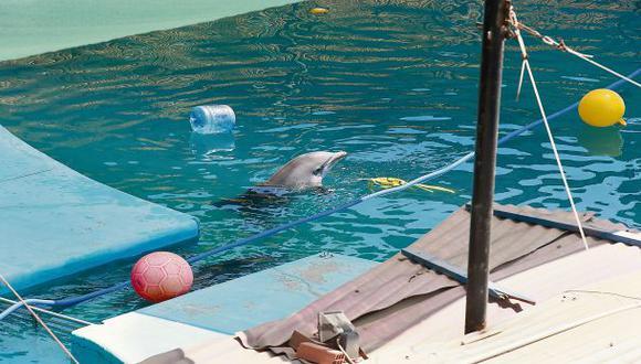 Piden modificar ley que permite cautiverio de los delfines
