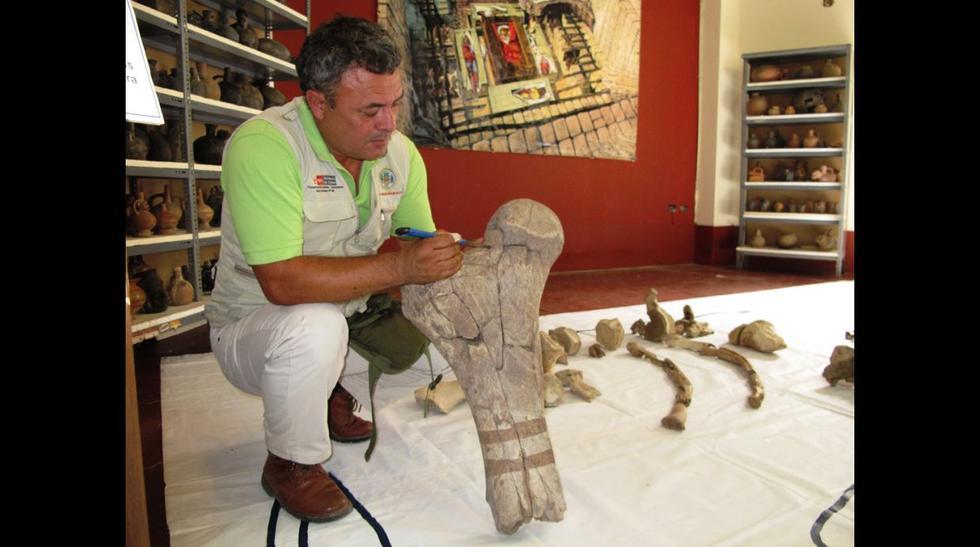 Fósiles de 70 millones de años se exhibirán en Sipán - 2