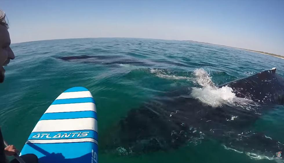 Las ballenas, grabadas desde una tabla de paddle en Australia. (YouTube)