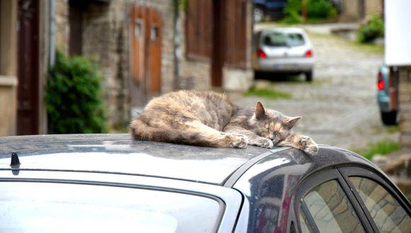 En Facebook se compartió una grabación que demuestra el instante en que unos gatos 'invaden' el interior de un auto. (Foto: Referencial/Pixabay)