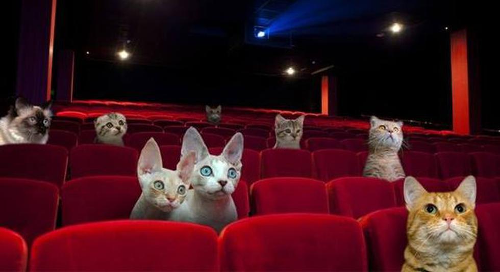 Cine respondió a usuario que denunció caída de gato en sala - 2