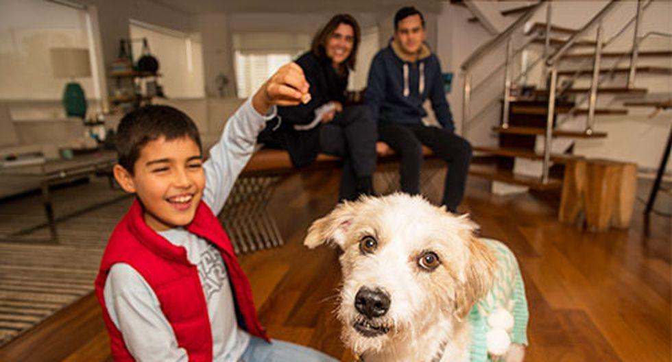 A Magnesia le calculan entre 2 y 3 años de edad. Con los perros rescatados uno nunca sabe, lo que Olga y sus hijos Sebastián y Óscar sí tienen bien claro es que la sienten como una hija y hermana más.