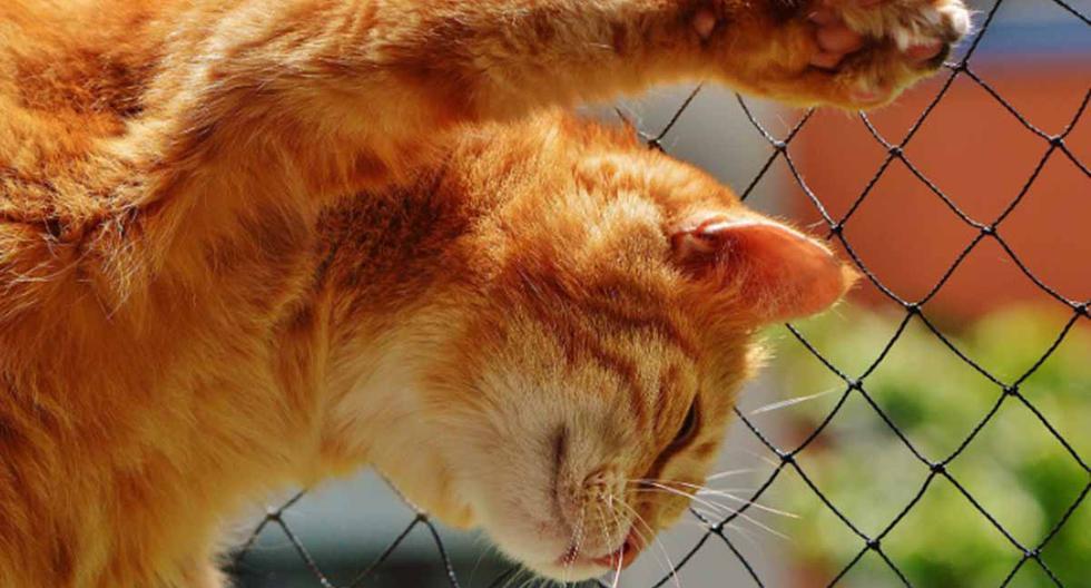 Un gato quiso salir de casa pero vio como sus planes acabaron arruinados.| Foto: Referencial/Pexels