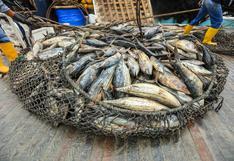 En video | ¿Qué es la pesca incidental? #MongabayExplica