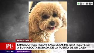 Miraflores: familia ofrece cinco mil soles para recuperar a su mascota robada