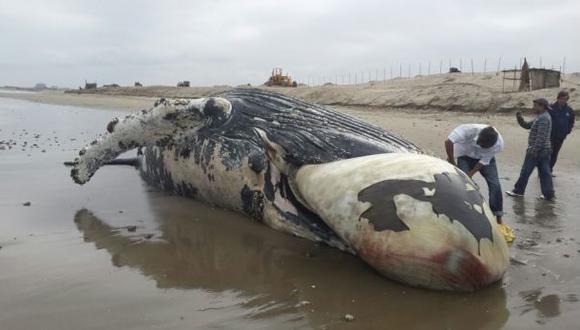 Especies marinas estarían muriendo por falta de alimento