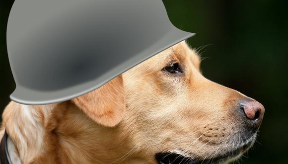 Según un vendedor de la zona, es muy recurrente ver al perro pasear apoyado sobre los hombros de su dueño. (Foto: PixaBay)