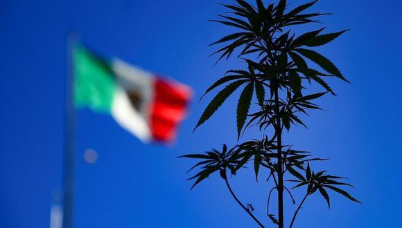 Personas muestran una planta de marihuana en el Zócalo de la Ciudad de México. (EFE/ Carlos Ramírez).