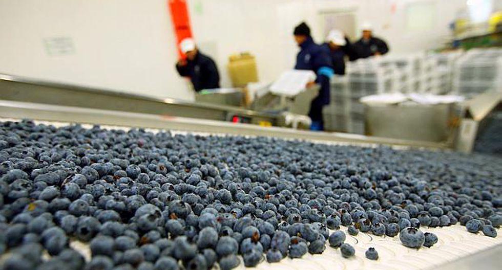 El volumen de exportación de arándanos alcanzó 40,580 toneladas en los primeros 10 meses del 2018. (Foto: El Comercio)<br>
