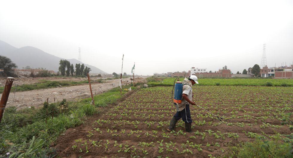 El Ministerio de Agricultura y Riego (Minagri) va a acompañar a las regiones en la producción agropecuaria. (Foto: GEC)