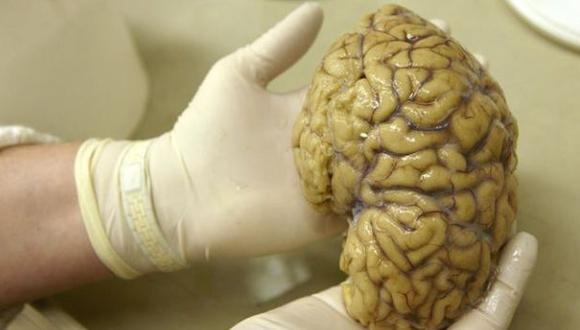 Texas: Roban 100 cerebros de la Universidad de Texas