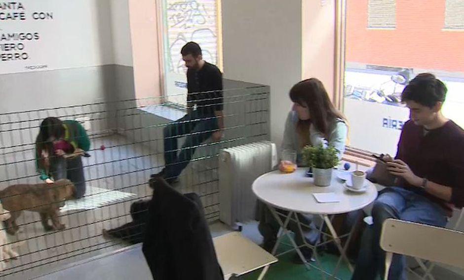 Desde que el negocio abrió sus puertas a principios de 2019, se han adoptado un total de 16 cachorros. (Foto: EFE)