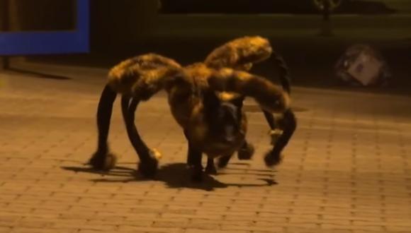 Este perro disfrazado de una 'araña gigante mutante' se volvió viral luego de asustar a miles de personas. (YouTube: SA Wardega)