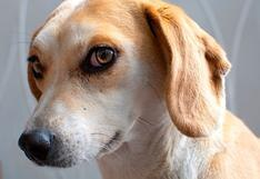 ¿Qué preguntarle a alguien interesado en adoptar a tu mascota?