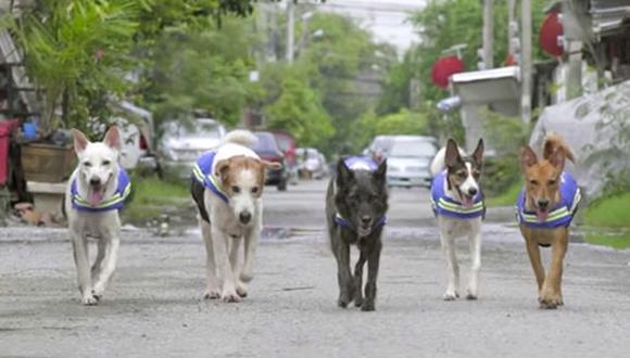 Estos perros son parte del equipo Watch Dogs, creado con la idea de velar por la seguridad de las comunidades de la capital tailandesa.