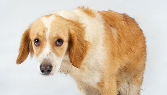 """La expresión de este perro es el reflejo de la angustia que sienten todos los dueños cuando su veterinario les dice """"Lo siento, todo indica que es cáncer"""". (Foto: Andrea Carrión)"""