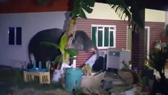 Un travieso elefante hizo de las suyas en el jardín de una casa que invadió el pasado 28 de diciembre | Foto: Captura de video YouTube / Viral Press